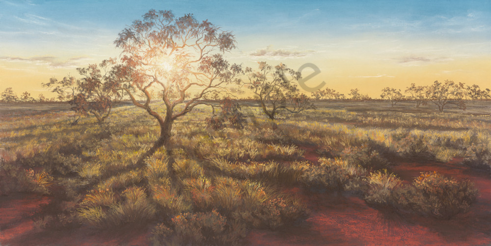 Coolibah Sun by Jenny Greentree