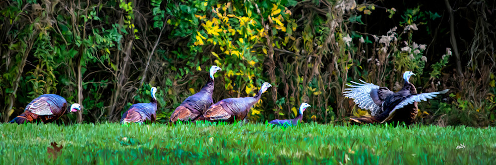 Turkey Pano Art | MDM photo