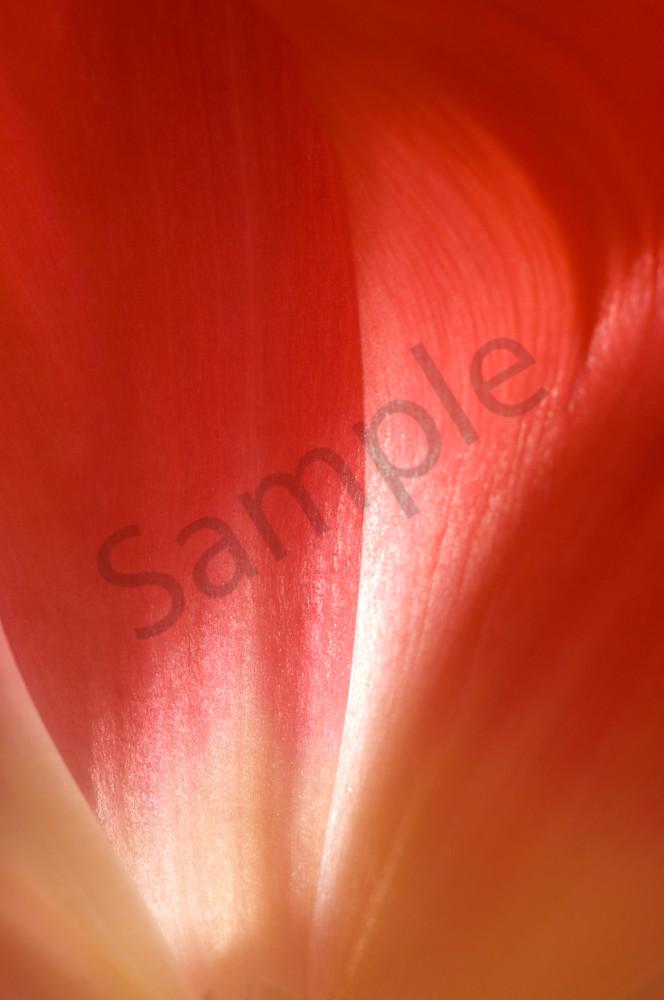 Parrot Tulip-#7
