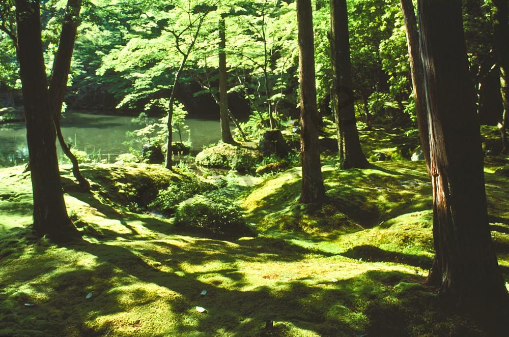 """Moss Garden"" Saiho-ji-""Koke-dere"""
