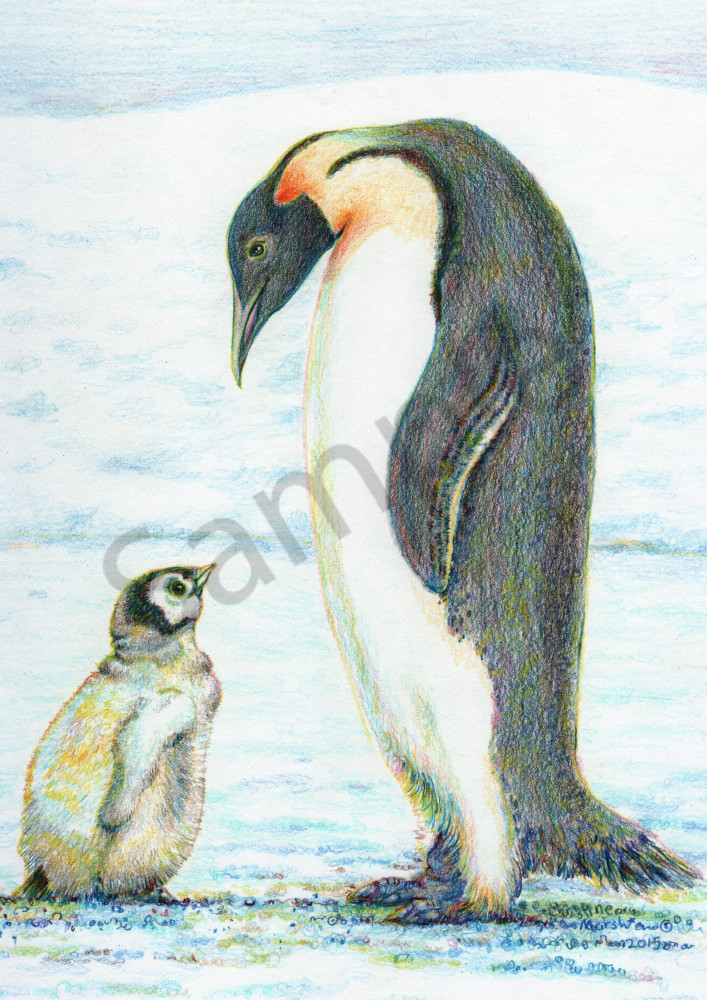 Peaceful Penguins