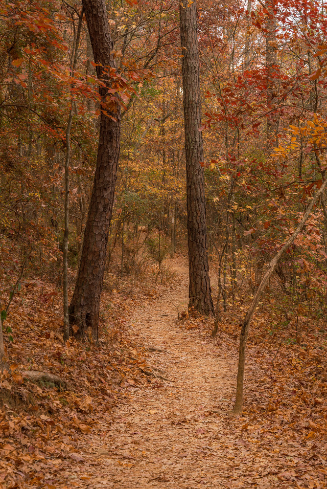 Path in the Woods | Susan J Photography | Fall colors