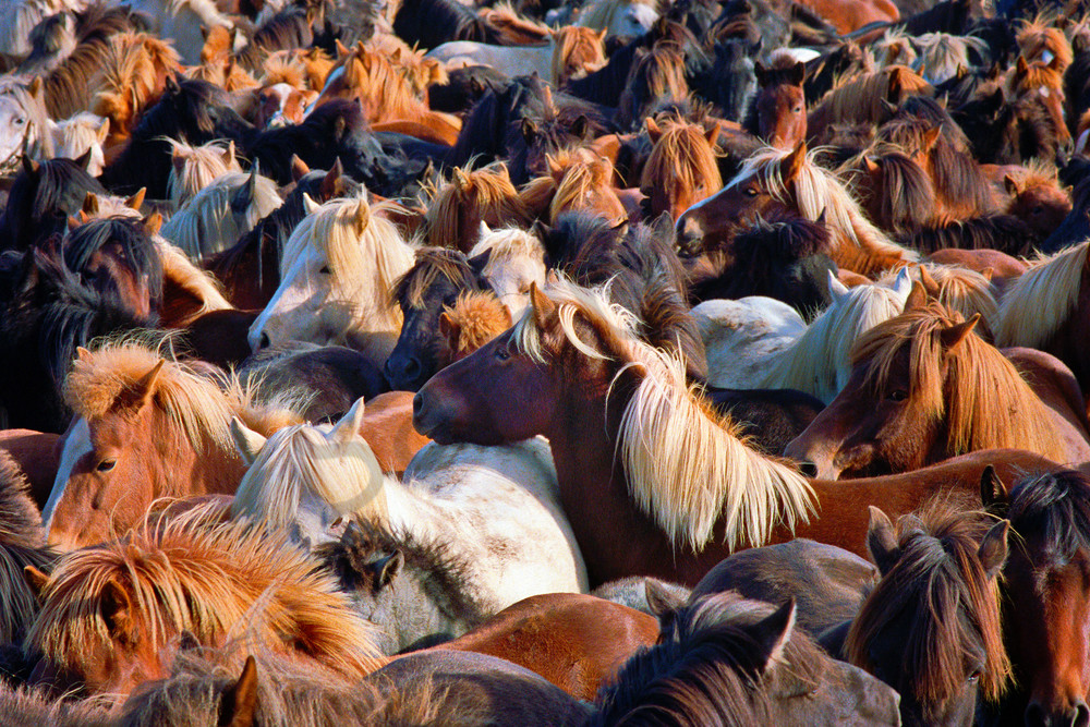 Horse Round Up Photography Art   frednewmanphotography