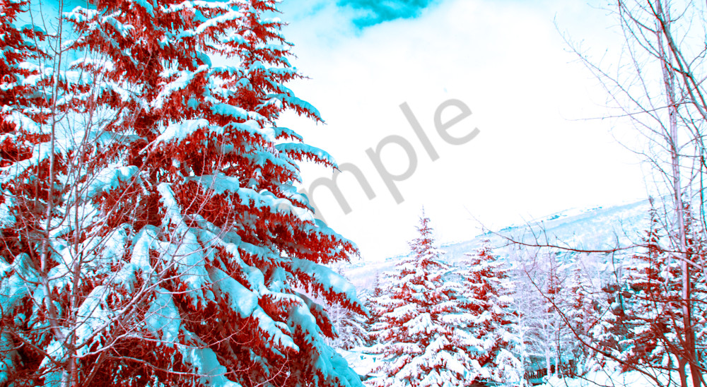 Deer Valley, Utah, Snow, trees