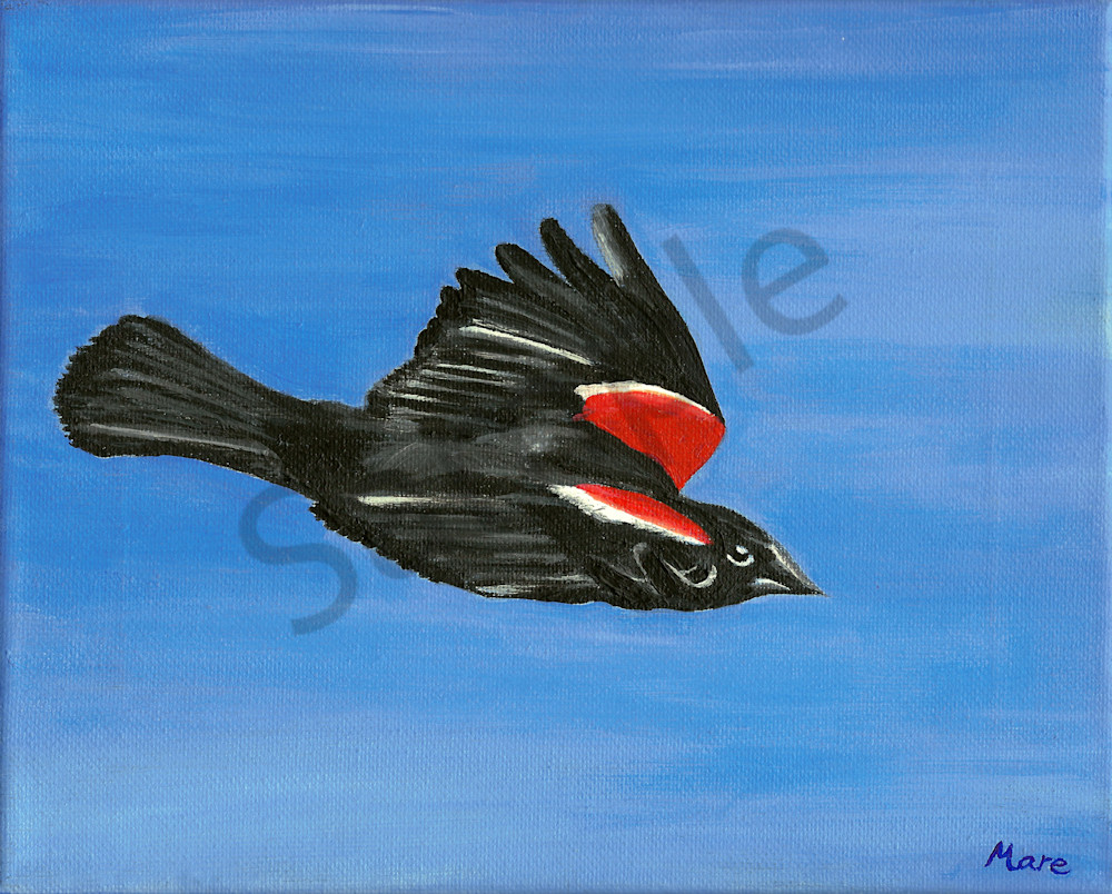 Original acrylic painting by artist Mary Anne Hjelmfelt titled Red-Winged Blackbird in Flight.