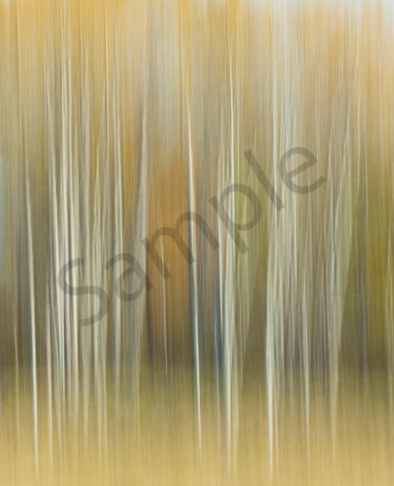 Golden Birches 2 for sale as fine art photograph.