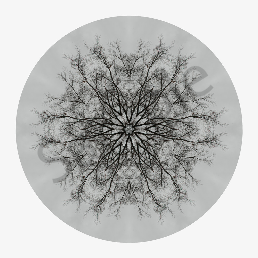 Winter Oak for sale as fine art photographic mandala.