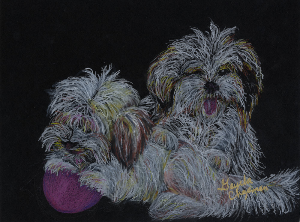 Havanese puppies art by Gayela's Premiere Watercolors|Main Store
