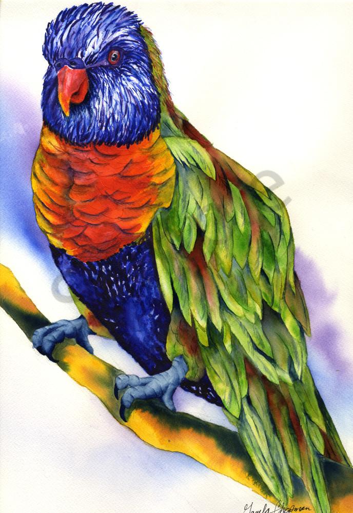 Rainbow Lorikeet art by Gayela's Premiere Watercolors|Main Store