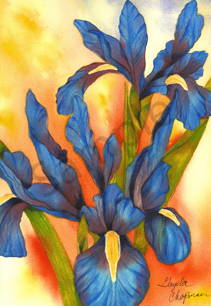 Blue Iris Flower art by Gayela's Premiere Watercolor|Main Store