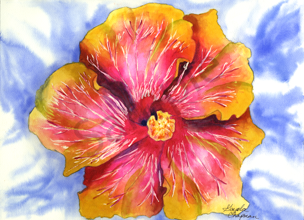 Pink & Yellow Hibiscus Flower Art by Gayela's Premiere Watercolor|Main Store