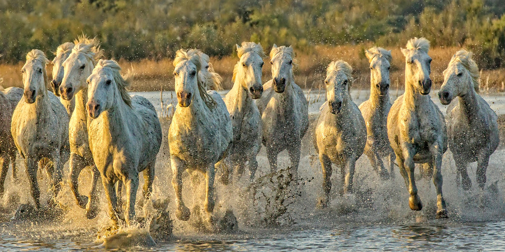 Horsepower Photography Art | John Martell Photography