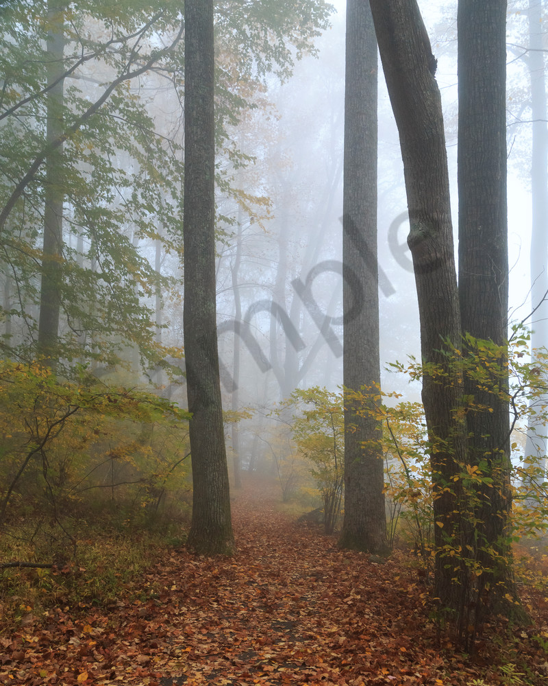 Tree Wall Art: Forest in Fog