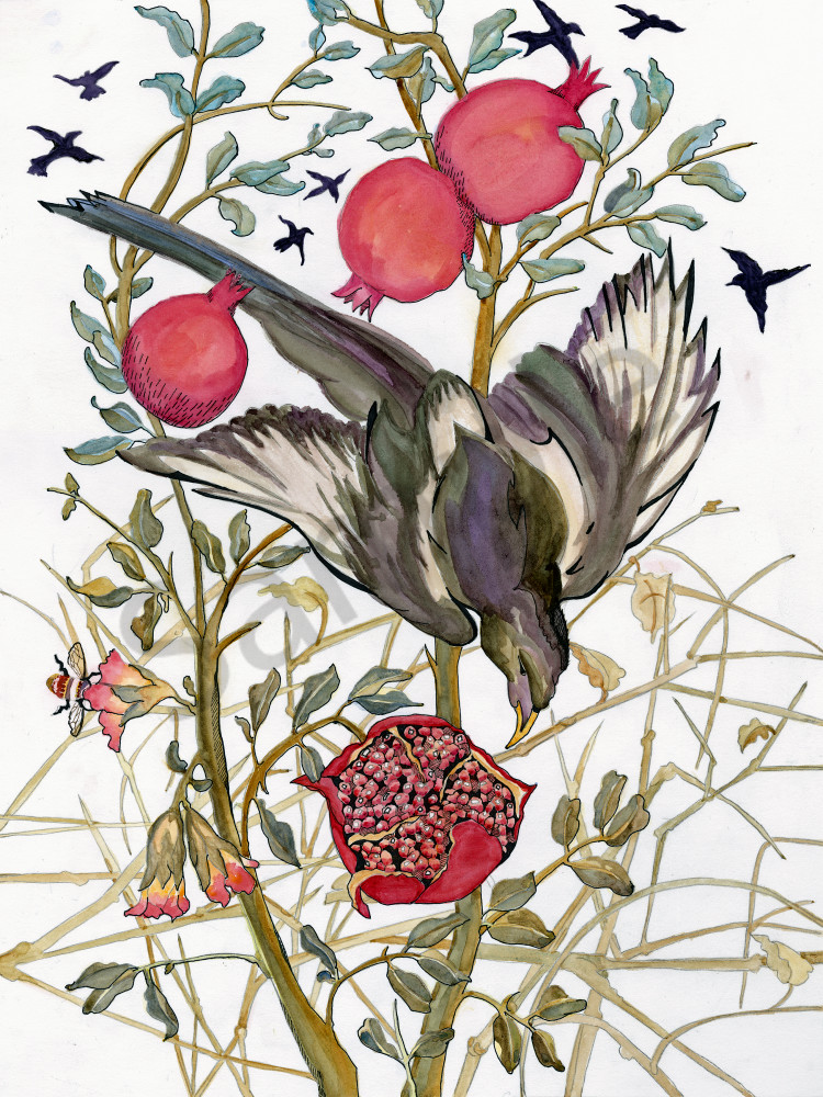 fine art by Ouida Touchon from New Mexico, Magpie and Pomegranate, watercolor- nature, for sale as archival reproductions in assorted sizes