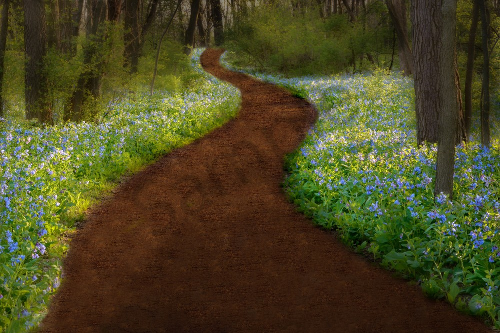Trail of Dreams, Virginia Blue Bells - fine art wall prints - fine art photography by JP Sullivan