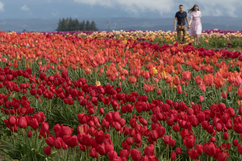 Hand In Hand Among Tulips Photography Art | Barb Gonzalez Photography