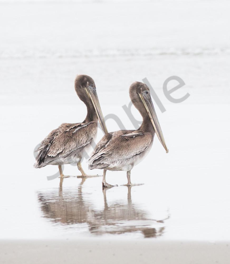 Pelican Duo Photography Art | Barb Gonzalez Photography