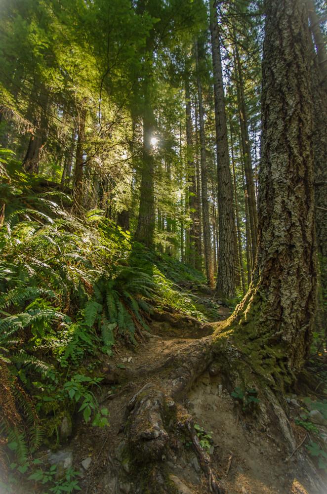 sunlit tree path