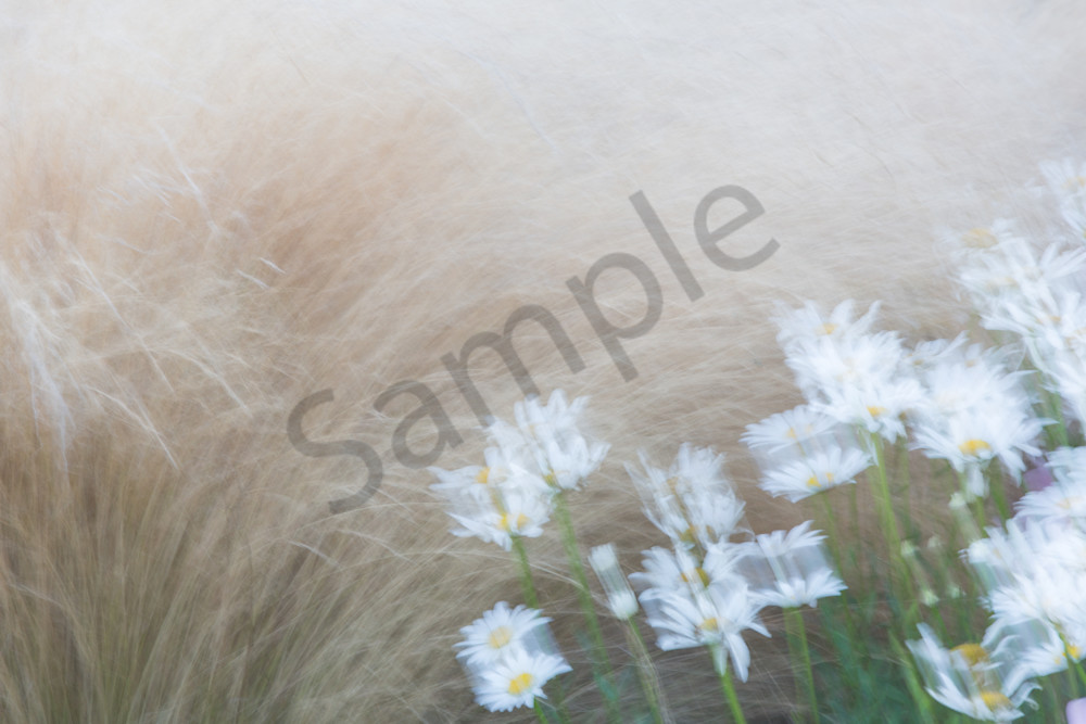 Daisy Abstract Photography Art | Barb Gonzalez Photography