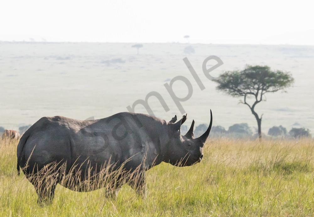 Profile, black rhino photo from African safari