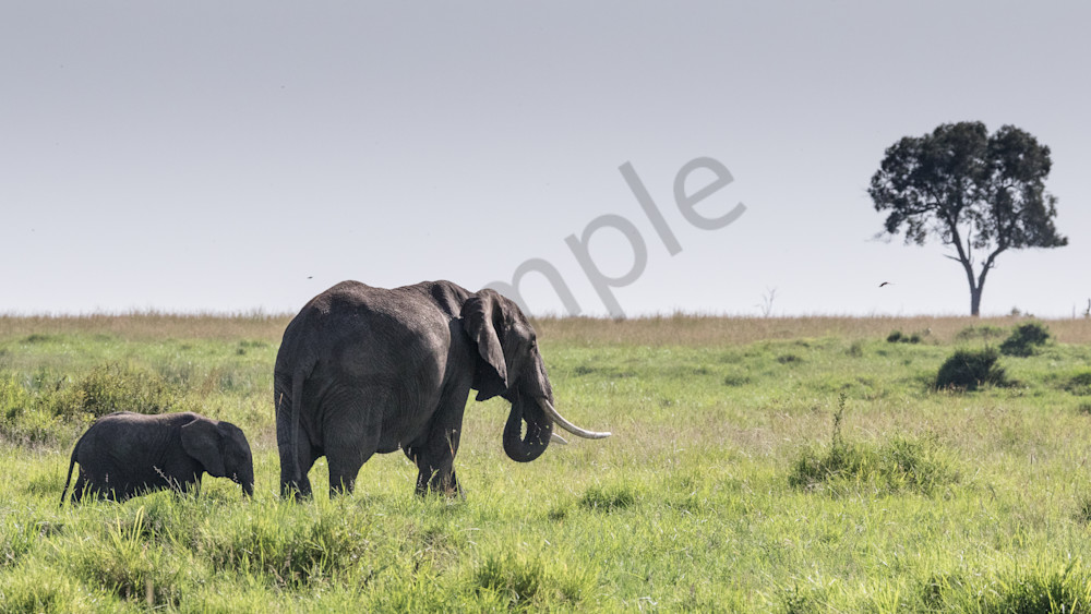 mom and baby elephant walk