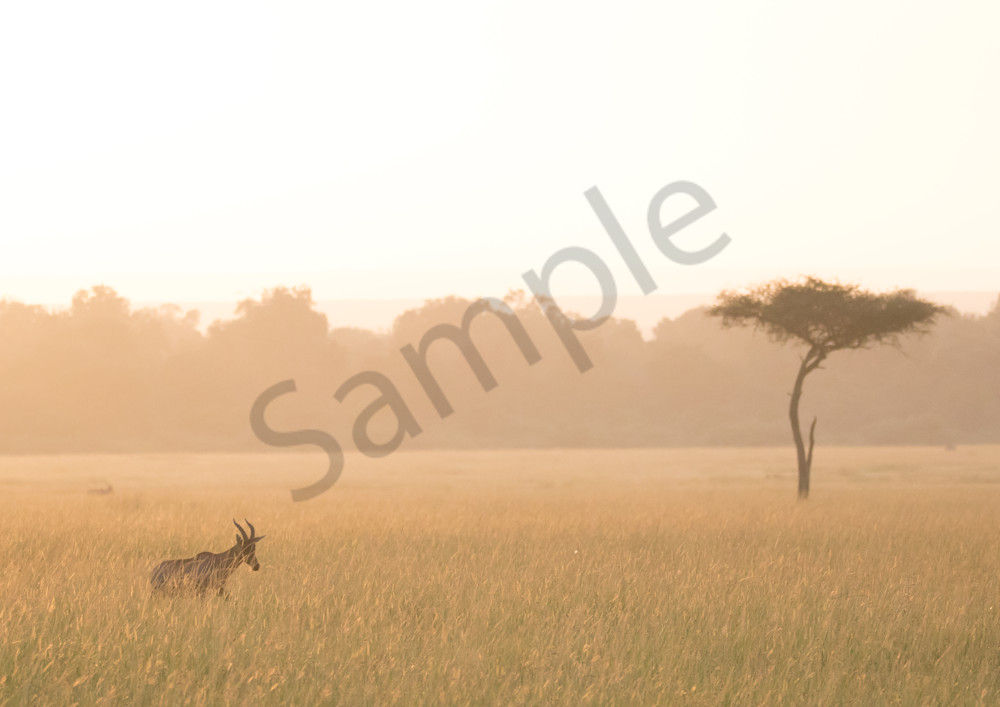 Topi And Acacia Tree Photography Art | Barb Gonzalez Photography
