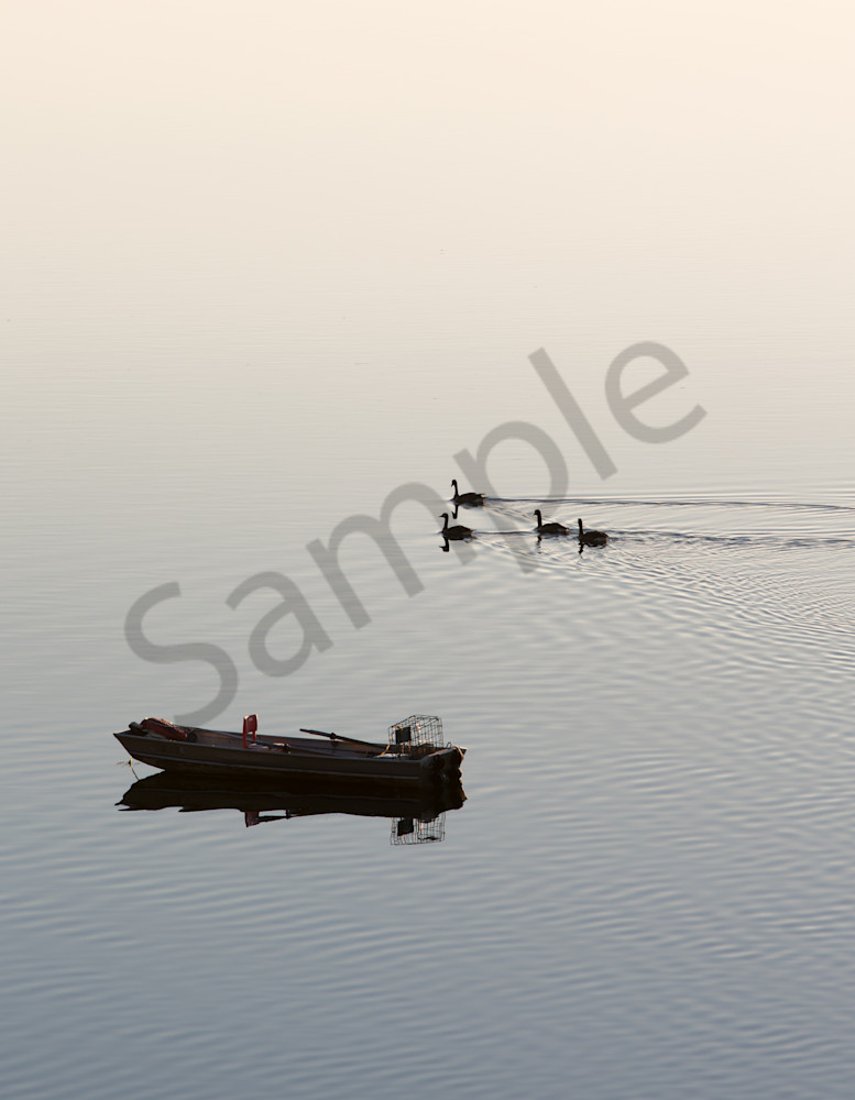 early morning boat geese