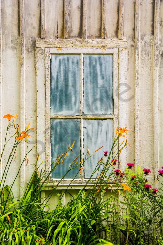 Fine art photograph of orange and purple flower in front of old bluish window