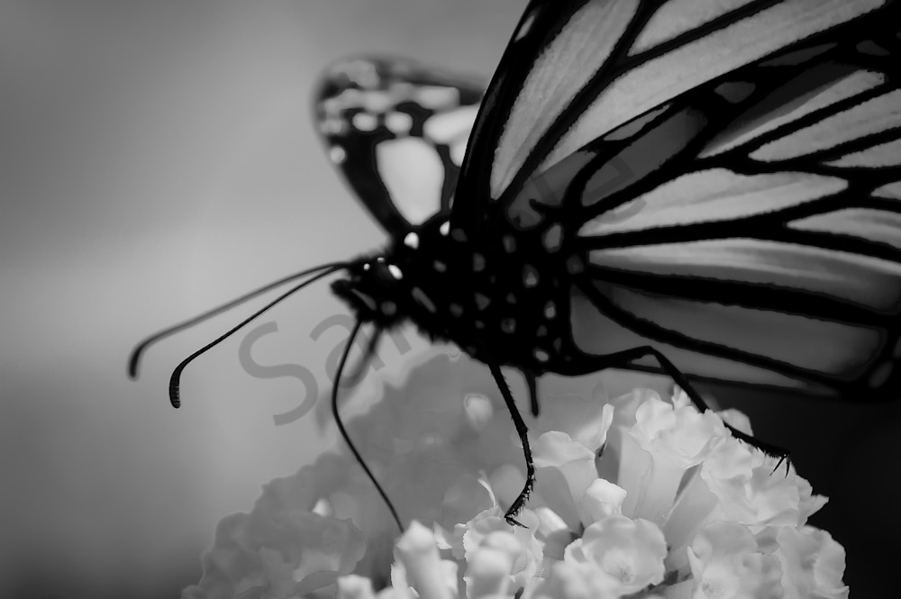 Black White Abstract Photograph Of A Monarch Butterfly For Sale As