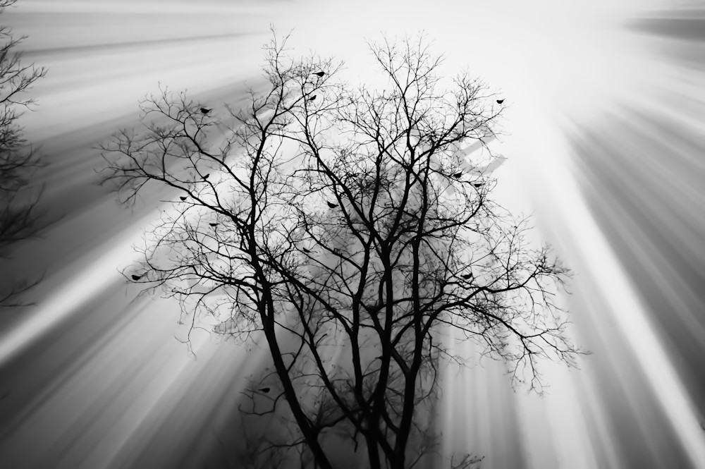 Black & white photograph of birds in a tree filled with light rays, for sale as fine art by Sage & Balm