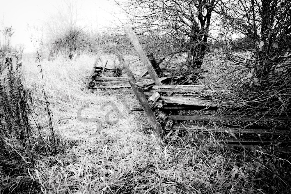 Gritty black & white photograph of a farmer's abandoned cedar fence in rural Ontario, for sale as fine art by Sage & Balm
