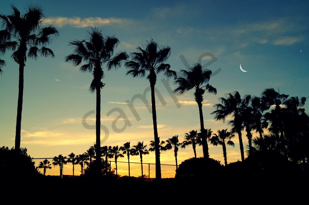 Moon And Palms Photography Art   Sage & Balm Photography