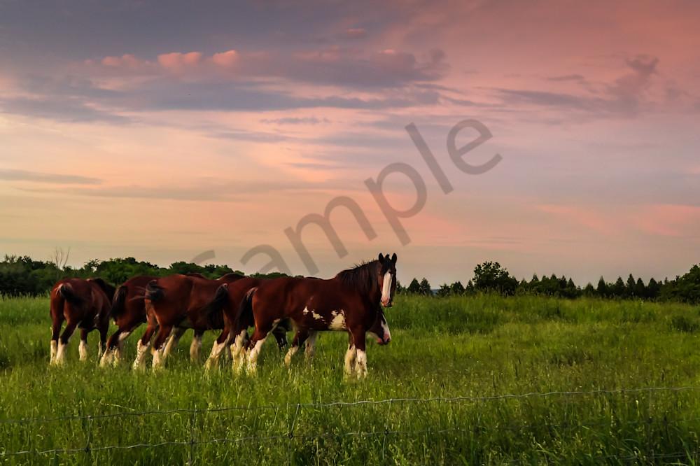 Sunset Horses Photography Art | Sage & Balm Photography