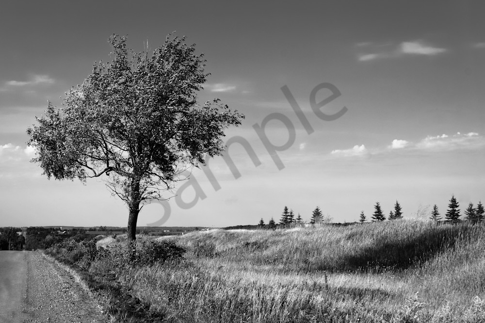 Tree in rural Ontario photograph in black & white for sale as fine art | Sage & balm Photography