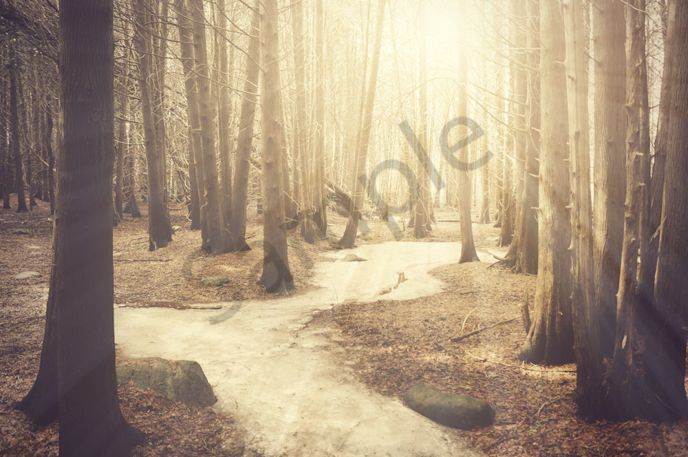 Icy Woodland River Photography Art | Sage & Balm Photography