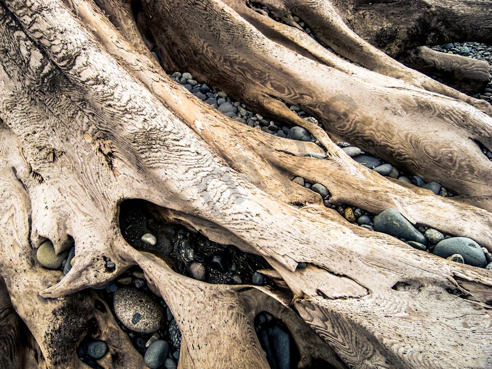Driftwood Photography Art | Sage & Balm Photography