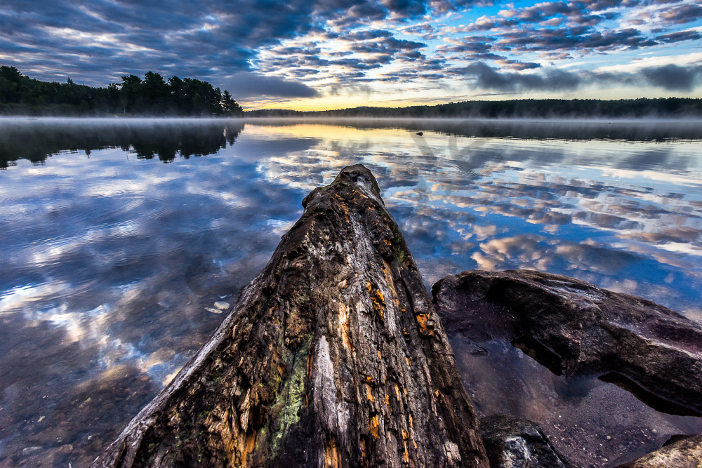 Algonquin state park at sunrise with petrified wood log