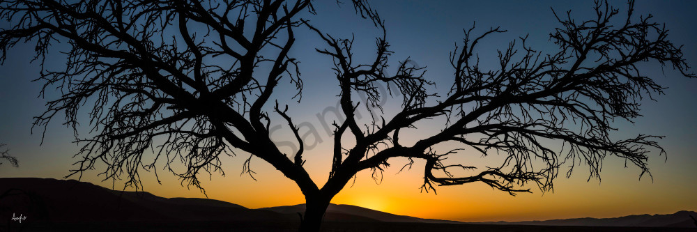 Panorama of old silhouetted tree at sunset, Namibia, photograph art