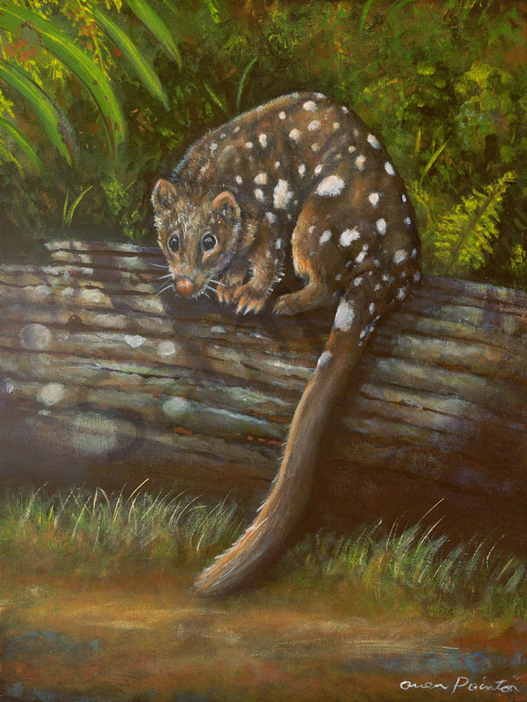Spotted Eastern Quoll