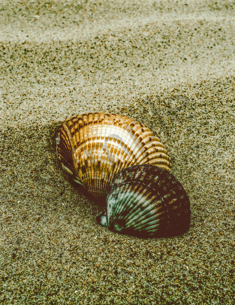 Dreamy Beach Sea Shells Colorized Nature Photo Wall Art by Nature Photographer Melissa Fague
