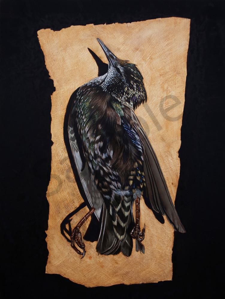 Starling  Art | Warfield Art and Design