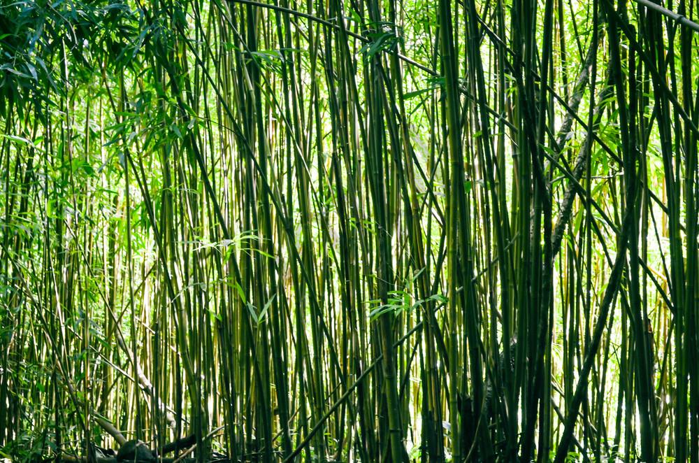 Maui Bamboo 003
