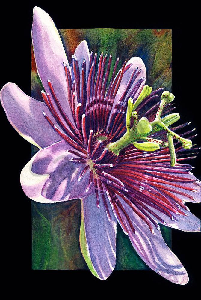 Passion Flower Art | ColleenNashBecht