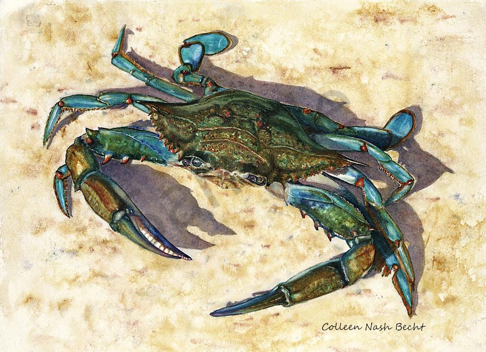 Blue Crab Art | ColleenNashBecht