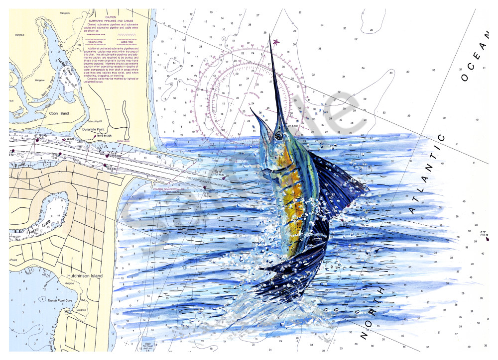 Off the Charts Sailfish