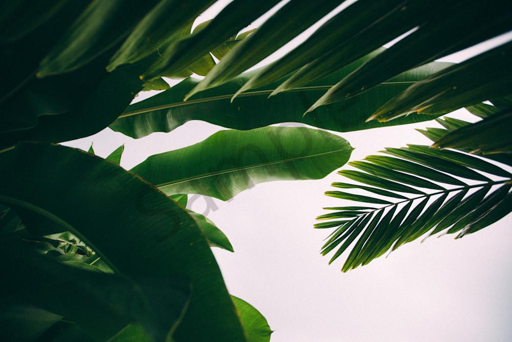 leaves -1