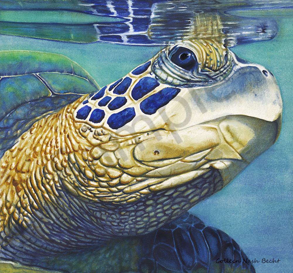 Beautiful Journey Sea Turtle Art | ColleenNashBecht
