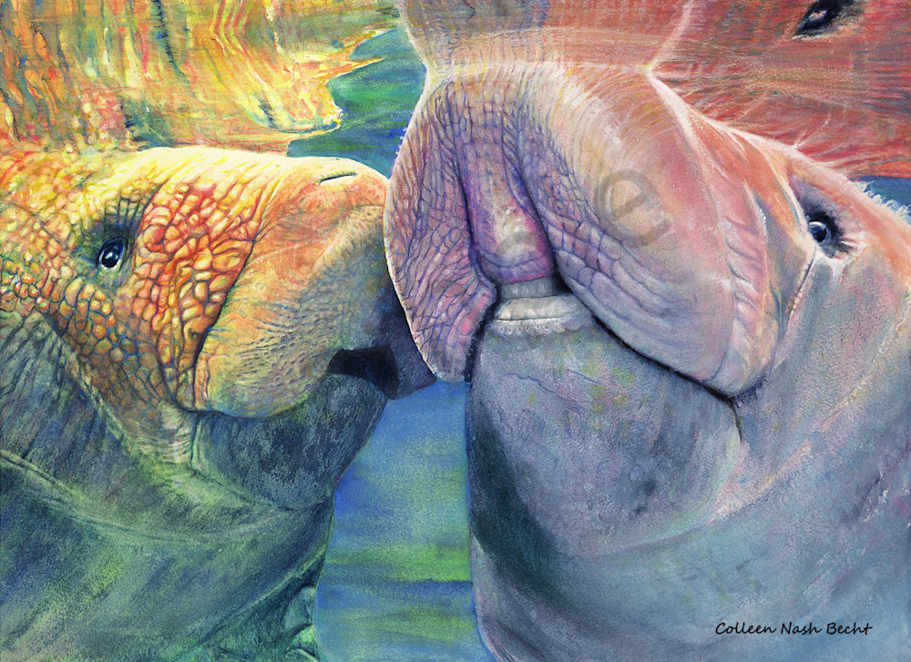 Mother And Calf Manatees Art | ColleenNashBecht