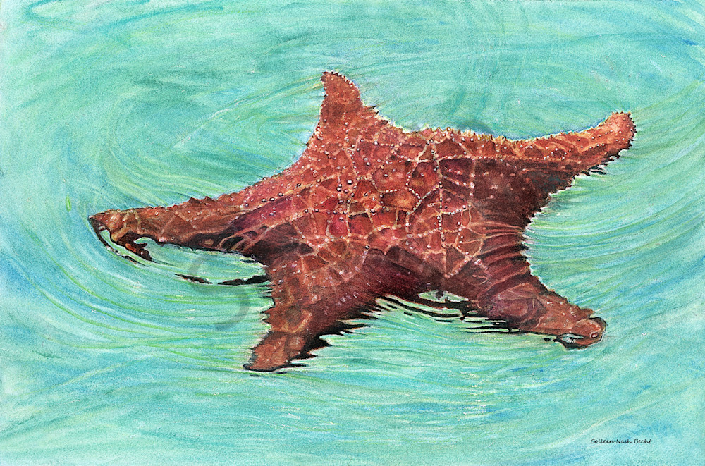 Sea Star / Star Fish Art | ColleenNashBecht