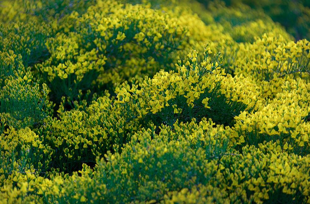 Yellow flowers 3 mightylinksfo